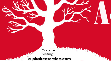 a-aaa tree service reviews